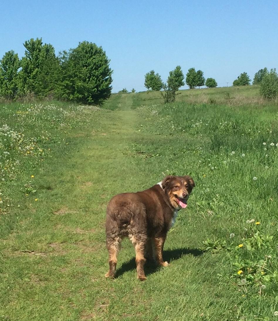 Scout dog park